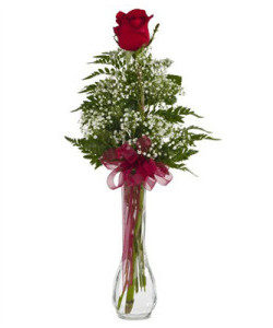 BV-Single Rose in a bud vase with babies breath and greenery