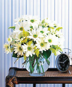 Mixed daisies