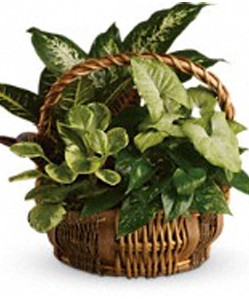 Dish Garden in a wicker basket