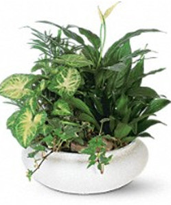 Dish Garden in a ceramic container.