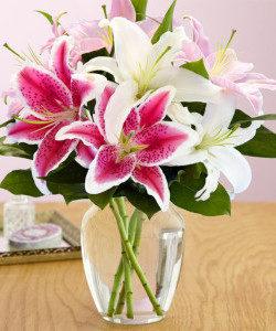 Stargazer lilies in urn vase